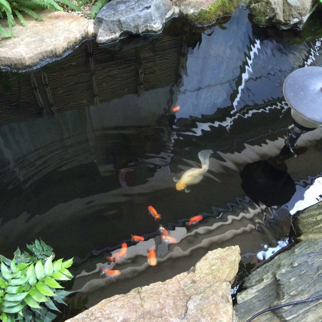 つる屋の金魚